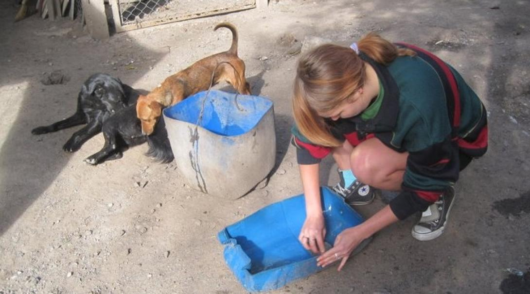 Animal care volunteer makes sure the dogs have fresh water at her placement in Argentina.
